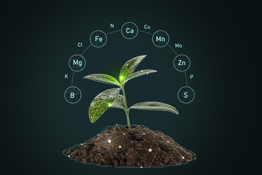 סוגי דשנים לגינה